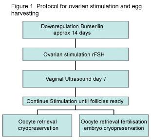 IVF Protocol